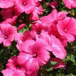Пазл онлайн: Яркие краски лета