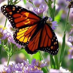 Пазл онлайн: Бабочка и цветы