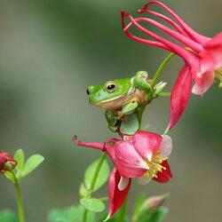 Пазл онлайн: За цветами