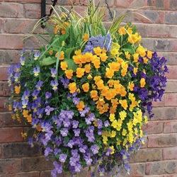 Пазл онлайн:  Ампельные цветы