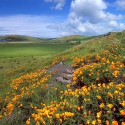 Пазл онлайн: Цветы на склоне