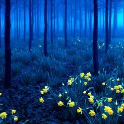 Пазл онлайн: Сказки Черного леса