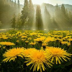 Пазл онлайн: Желтое чудо