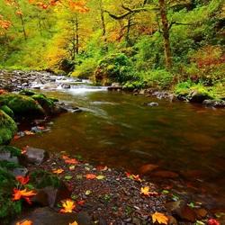 Пазл онлайн: Осень в лесу