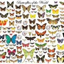 Пазл онлайн: Бабочка мира