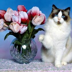 Пазл онлайн: Кошка и тюльпаны