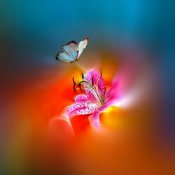 Пазл онлайн: Бабочка