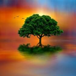 Пазл онлайн: Одинокое дерево