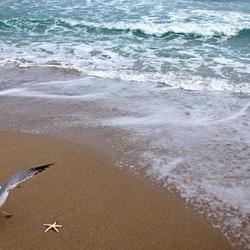 Пазл онлайн: Чайка на берегу