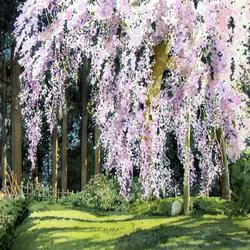 Пазл онлайн: Дерево в цвету