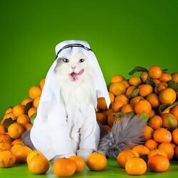 Пазл онлайн: Продавец мандаринов