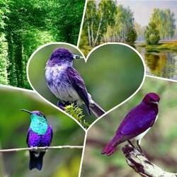 Пазл онлайн: Фиолетовые птицы