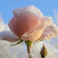 Пазл онлайн: Облако из роз
