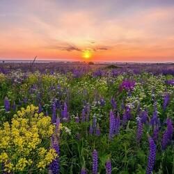 Пазл онлайн: Цветущее поле