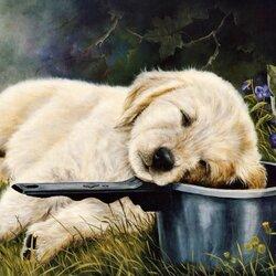 Пазл онлайн: Спящий щенок