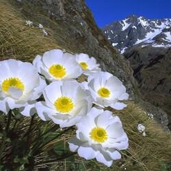 Пазл онлайн: Горные цветы