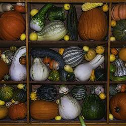 Пазл онлайн: Кабачки и тыквы