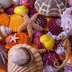 Пазл онлайн: Из морских глубин