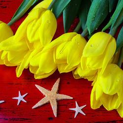 Пазл онлайн: Тюльпаны и морские звезды