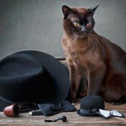 Пазл онлайн: Смуглый мачо