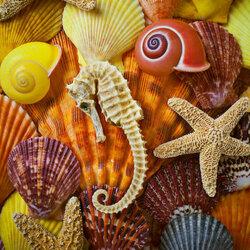 Пазл онлайн: Морской конёк и ракушки