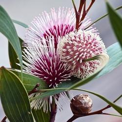 Пазл онлайн: Волшебный мир цветов