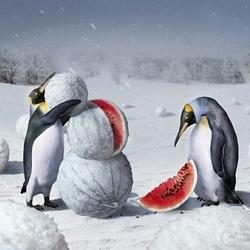 Пазл онлайн: Херсонская зима