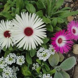 Пазл онлайн: Цветы сибири