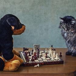 Пазл онлайн: Шахматисты