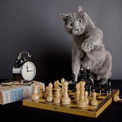 Пазл онлайн: Шахматист