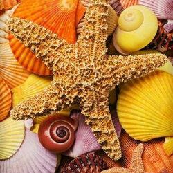 Пазл онлайн: Звезда и ракушки