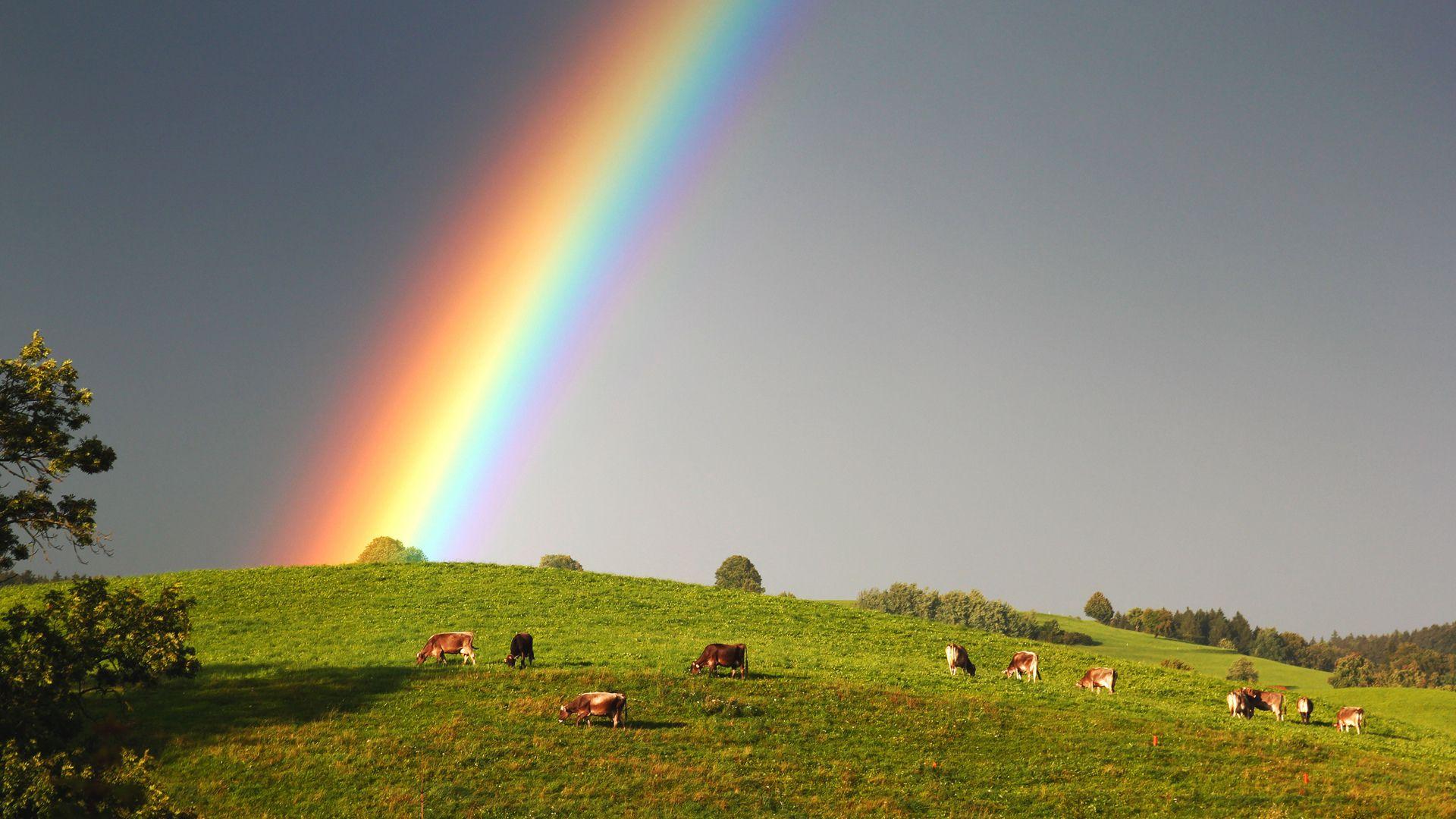 красивые фото радуги на рабочий абрикосовое варенье или