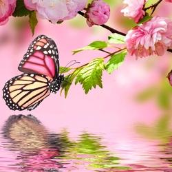 Пазл онлайн: Бабочка и сакура