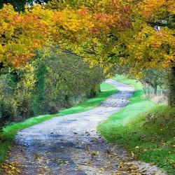Пазл онлайн: Дорога через лес