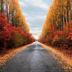 Пазл онлайн: Дорога в осень