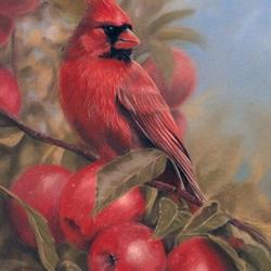 Пазл онлайн: Кардинал и яблоки