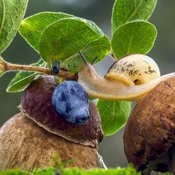 Пазл онлайн: С гриба на гриб