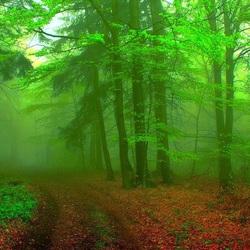 Пазл онлайн: Туман в лесу