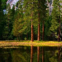 Пазл онлайн: Лесная поляна