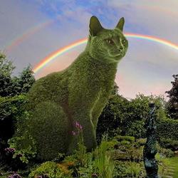 Пазл онлайн: Котокусты