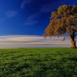 Пазл онлайн: Дерево на лугу