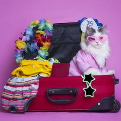 Пазл онлайн: В отпуск