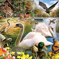 Пазл онлайн: Прекрасные лебеди