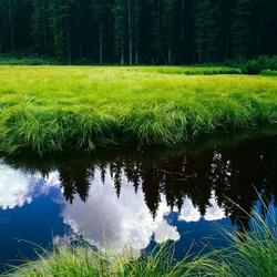 Пазл онлайн: Отражение леса