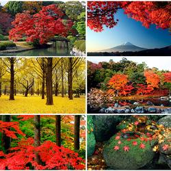 Пазл онлайн: Осенние краски Японии
