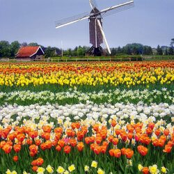 Пазл онлайн: Мельница в Голландии