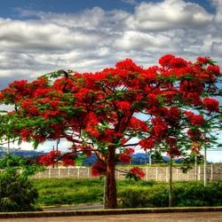 Пазл онлайн: Цветущее дерево