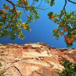 Пазл онлайн: Персики