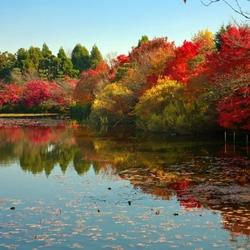 Пазл онлайн: Краски осени