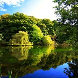 Пазл онлайн: Ивы у реки